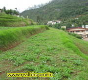 Land in ooty for sale.